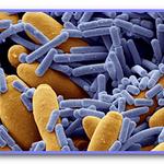 Ошибки при антибиотикотерапии