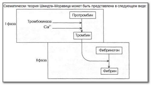 Теория Шмидта-Моравица