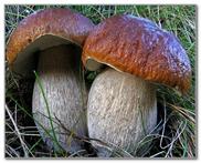 Отруєння грибами у дітей